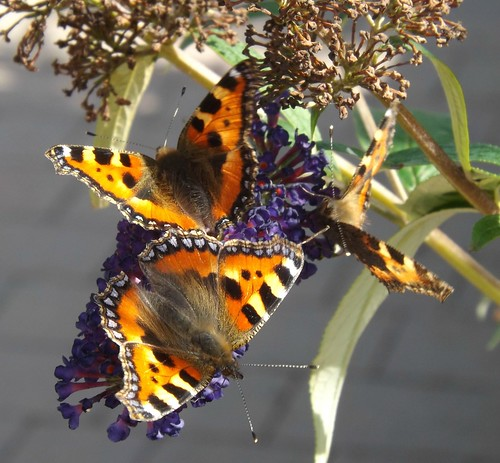 Butterfly Fest - Featured on BBC NWT Weather 3.9.2012