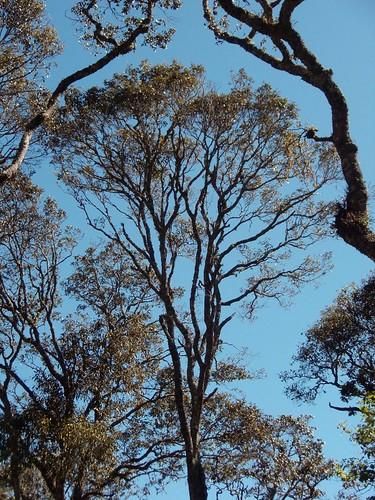 Small patch of forest near Monte Negro - bosque cerca de Monte Negro, Región Mixteca, Oaxaca, Mexico