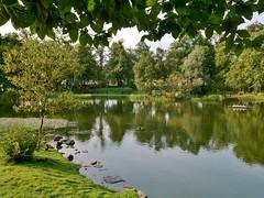 Duck pond (3)