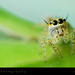Eyes of Spider by Ayan.Photography