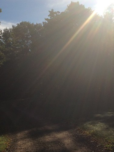 Rays of morning sun