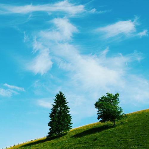 trees sky clouds canon romania canonef2470mmf28lusm moldova malini bucovina suceava canoneos50d canon50d mygearandme mygearandmepremium mygearandmebronze mygearandmesilver mygearandmegold mygearandmeplatinum mygearandmediamond valenistinisoara