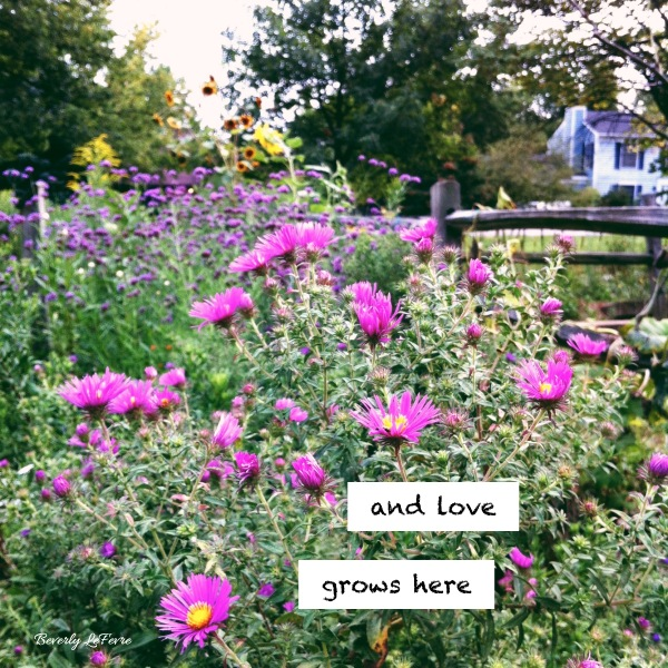 and love grows here