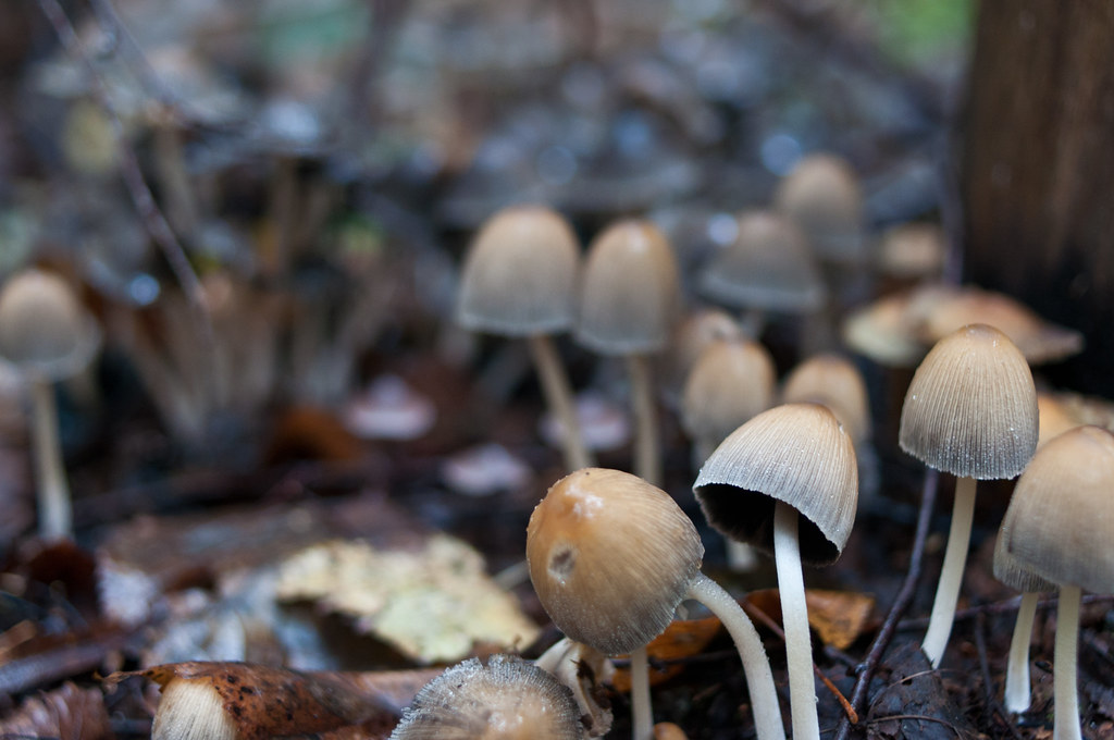 Съездили за грибами