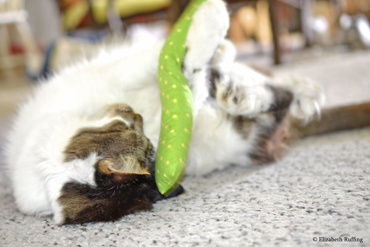 Kitty cat playing with a catnip cigar, by Elizabeth Ruffing