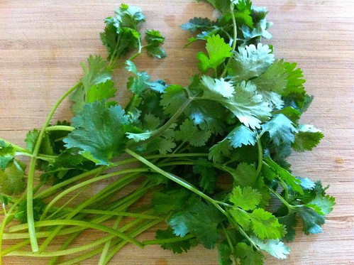 Handful of Cilantro