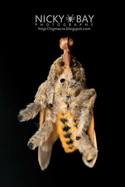 Moth - DSC_6329