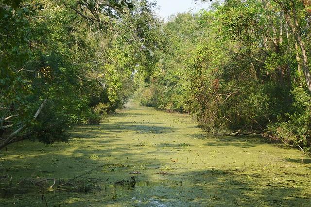 swamp tour