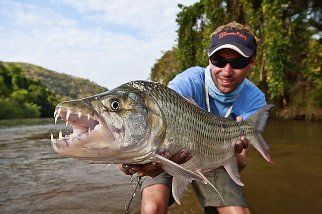 рыбалка на тигровую рыбу голиаф