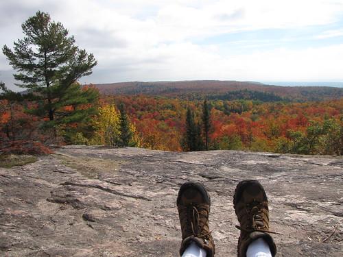 Wolf trail bench (feet)