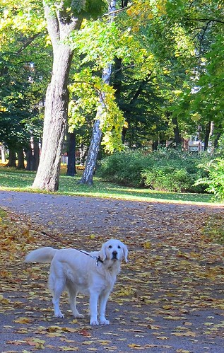 A white dog in a park by Anna Amnell