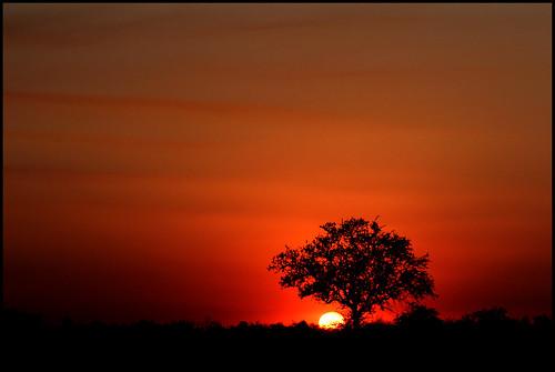 sunset red orange southafrica zonsondergang rood krugerpark oranje kruger savanne zuidafrika