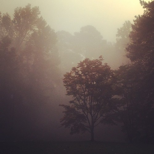 I've come to enjoy foggy mornings.