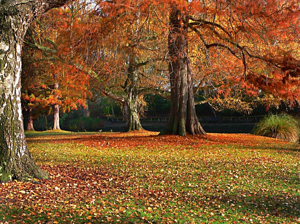 Hagley Park New Zealand. (4)