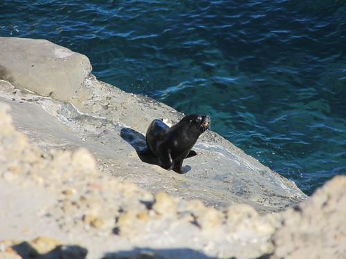 Puerto Piramídes: des lions de mer