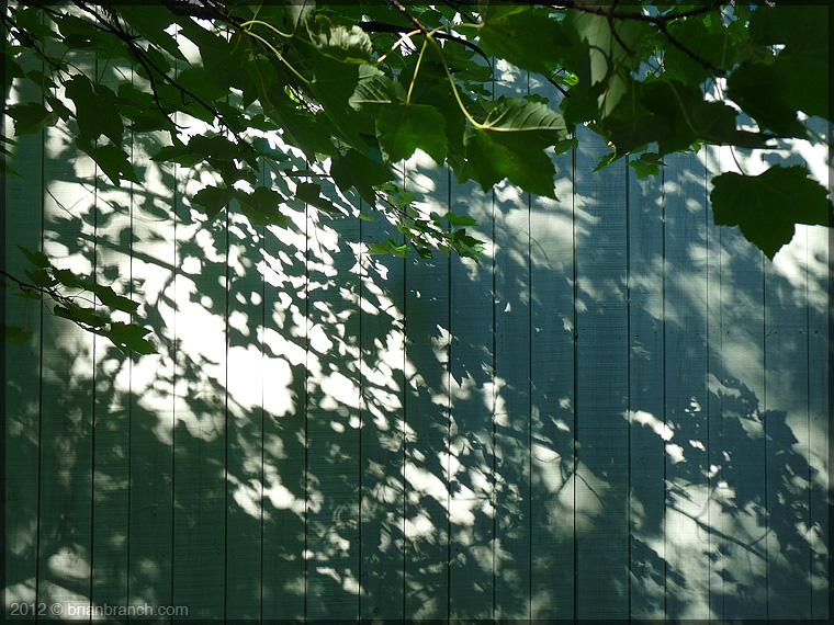 P1270937_leaves