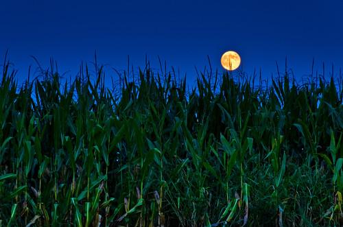 無料写真素材, 自然風景, 田園・農場, 月