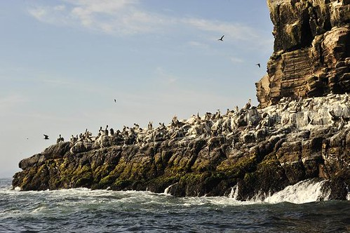 Pucusana bird colony - Sea kayaking with Nature Expeditions in Peru
