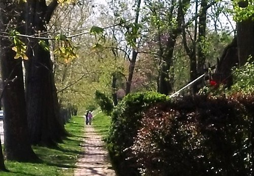 a street in DC's Cleveland Park neighborhood (c2011 by FK Benfield)