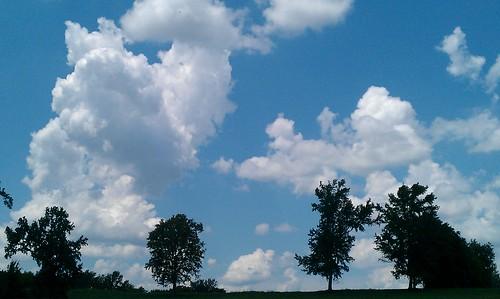 cameraphone trees sky clouds skyscape landscape cloudgazing skygazing