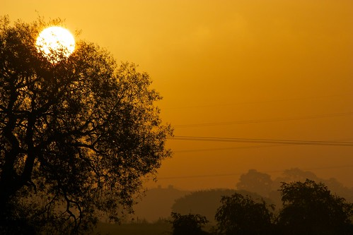 sun tree field dawn buckingham