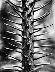 Thorns of Life!
