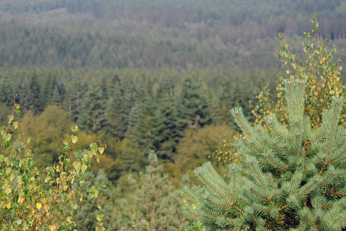 Forest of Dean from New Fancy View