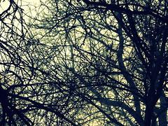 Labyrinthe - Photo of Bétête