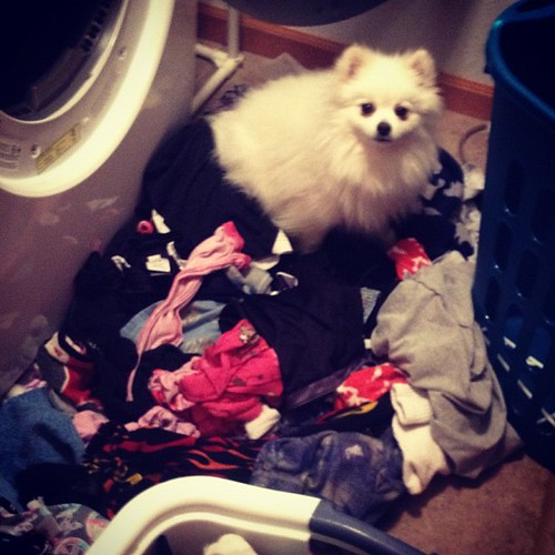 Crazy Daisy...get off the kids clean clothes!!