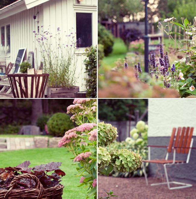 morgon i trädgården - höstkänsla