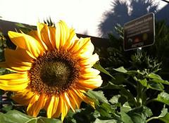 downtown-farmers-garden-gainesville