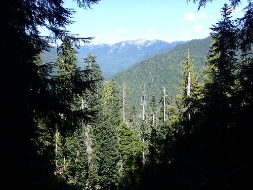 usa washington nationalpark unitedstates hiking backpacking wilderness olympicnationalpark elwharivertrail