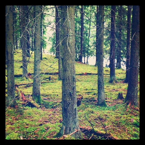 camping woods sweden