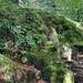 Mossy rock Bergen