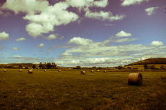 Rolls of Hay in Country - Photo of Champigneulles-en-Bassigny