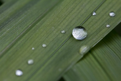 Raindrops on leaf