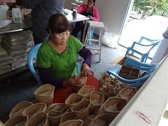 部落婦女為海稻米包裝加工。(圖片來源:花蓮農改場)