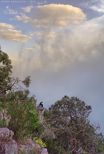 trees boy sunset nature fog clouds landscape looking atmosphere abha assouda