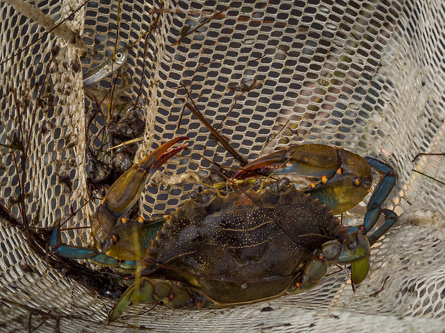 Father and Son, Crabbing for Fun