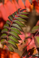 Sumac_40653.jpg by Mully410 * Images