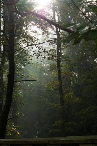 Nebelschein