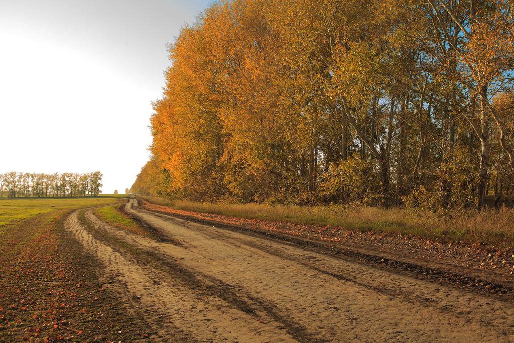 Фотографии Новосибирска, фото Новосибирск