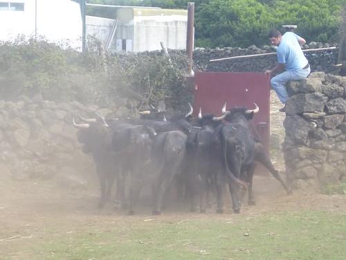 touros 1