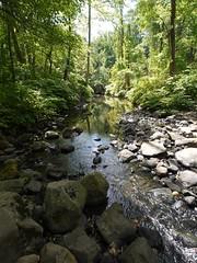 日, 2012-09-16 13:35 - Rahway Trail
