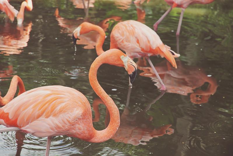 Flamingo Gardens 25