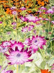 Flower Garden - image 340 by dennisar