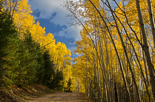newmexico southwest color fall landscape golden pentax outdoor hiking scenic foliage highdesert aspen tamron sigma1020mm 18200mm santafenationalforest santafeskibasin mitchtillison