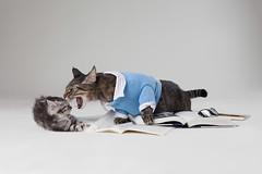 [フリー画像素材] 動物 1, 猫・ネコ, 本・ブック, 怒る ID:201210101800