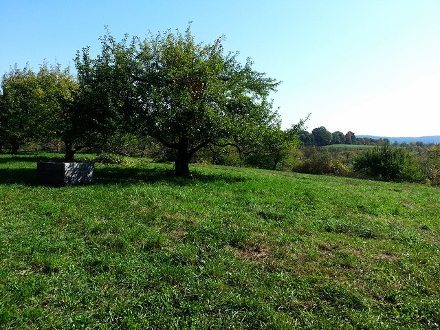 View of Stoneridge Orchard