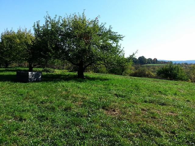 View of Stoneridge Orchard